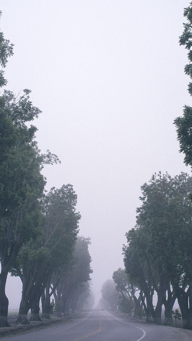 Foggy Road Tall Trees iPhone 5 Wallpaper