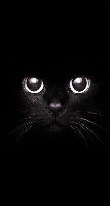 Black Cat Staring Eyes