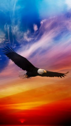 Flying Eagle Dramatic Sky iPhone 6 Wallpaper