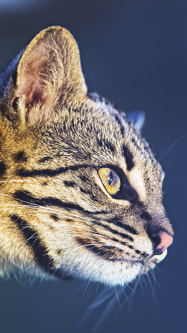 International Cat Day Portrait iPhone 5 Wallpaper