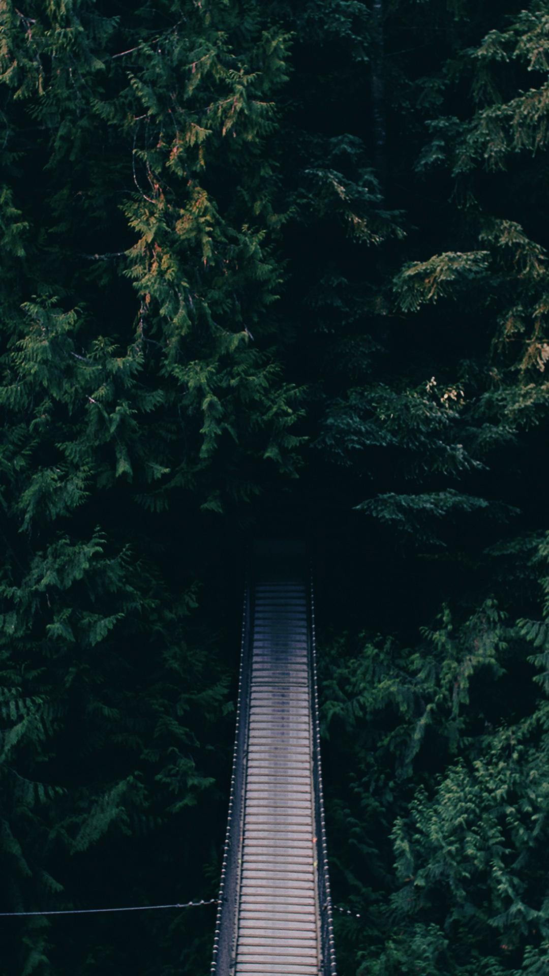 Suspended Forest Bridge iPhone 6 Plus HD Wallpaper